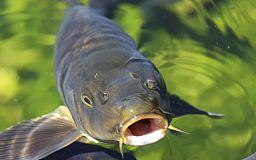 З 1 квітня в Україні заборонена риболовля