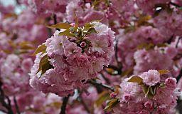 Погода в Кривом Роге 17 апреля