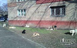 Собачья жизнь. Зачем Кривому Рогу идентификация бездомных животных