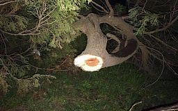 На месте сруба деревьев чиновники Кривого Рога организуют выездную инспекцию