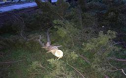 «Будем пристально наблюдать за состоянием деревьев», - начальник УБЖП исполкома горсовета Кривого Рога