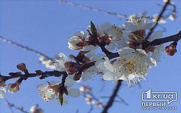 Погода в Кривом Роге на 23 апреля