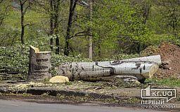 В Кривом Роге деревья омолаживают вырубкой?