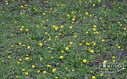 Погода у Кривому Розі на 26 квітня