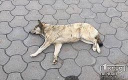Защитим животных от варварских убийств. Криворожане собирают подписи