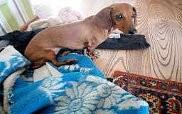 Из частной гостиницы для животных в Кривом Роге пропала собака
