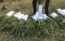 7 миллионов гривен хотели выручить за «дурь» наркодиллеры в Днепропетровской области