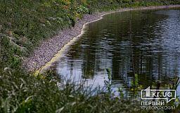 Шахтные воды не убивают все живое в Саксагани Кривого Рога
