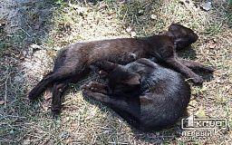 Коты в Кривом Роге будут гибнуть, но правила нужно соблюдать, - итоги совещания