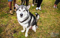 Выставка собак в Кривом Роге состоялась несмотря на проливной дождь