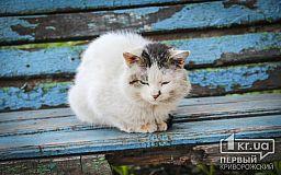 Криворожские коты добавят депутатам и чиновникам работы
