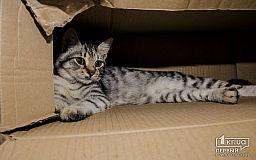 Пусть живут коты в Кривом Роге, - горожанин