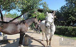 Терапія від шляхетних тварин. В Кривому Розі відзначили День конюшні
