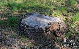 Несколько криворожан незаконно вырубили деревья