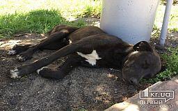 Защитить бездомных животных от варварских убийств попробуют депутаты горсовета Кривого Рога