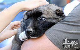 В Кривом Роге запланирована стерилизация 246 бездомных собак