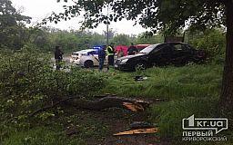 В Кривом Роге иномарка снесла дерево. Водителя госпитализировали (обновлено)