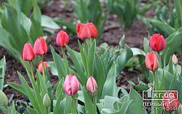 Погода у Кривому Розі на 16 травня