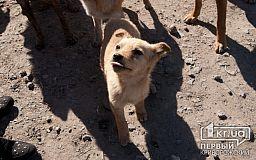 «Их не найдут и не поймают», - криворожанка о «людях», снявших с собак кожу