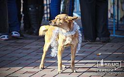 Зоозащитники обещают финансовую награду за информацию о живодерах