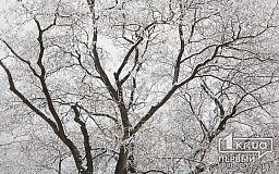 Погода в Кривом Роге на 7 января