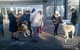 Кривий Ріг проти жорстокого поводження з тваринами. Зоозахисники провели акцію під міськвиконкомом