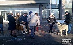 Инна Иванченко организовывает собачьи бои? (Видео 18+)