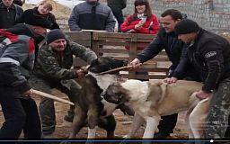 «Не собачьи бои, а туркменская традиция»,- Инна Иванченко