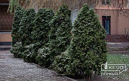 Какой будет погода в Кривом Роге 29 января