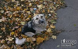 У Кривому Розі планують стерелізувати близько 150 безпритульних собак