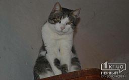 Кот Василий готов стать верным другом