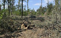 Лесорубы, мы за вами наблюдаем. В Долгинцевском районе происходит вырубка лесопосадки