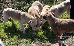 В Терновском районе неизвестные расстреляли собак