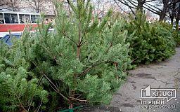 Криворізькі новорічні дерева можуть опинитись поза законом?