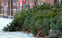 За сколько в Кривом Роге можно купить елку и есть ли у продавцов документы на хвою