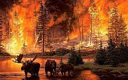 Как вести себя в лесу, чтобы не допустить пожара