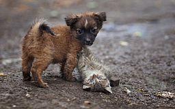 Криворожские депутаты отложили вопрос строительства приюта бездомным животным