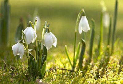 Картинки на k первый день весны