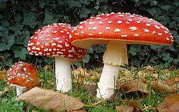 Осторожно: ядовитые грибы на Днепропетровщине!