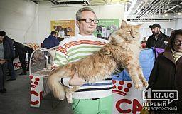 Международную выставку кошек в Кривом Роге посетили «Человек-паук» и «инопланетяне»