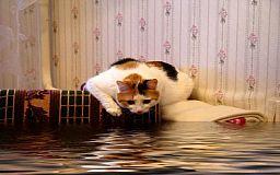 Что делать, если вас затопило