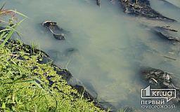 Зловонная река, белые берега: в Кривом Роге загрязняют водоем (СЮЖЕТ)