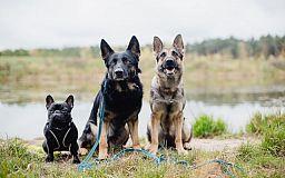 Незнание законов не освобождает от ответственности: Криворожские копы «взялись» за собаководов