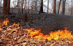 100 выездов за сутки. Продолжается работа по предотвращению лесных пожаров