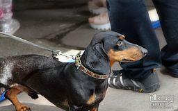 Заложники ситуации: В каких условиях выгуливают собак в Кривом Роге и мире