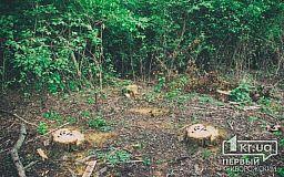 В Кривом Роге на Карачунах рубят деревья: «Все по закону»,- лесничество