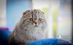 Усы, лапы и хвост: В Кривом Роге прошла выставка кошек