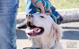 В ответе за тех, кого приручили: Как в Кривом Роге проходила выставка собак