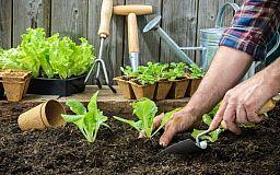 Вниманию ботаников! В Кривом Роге началась «Зеленая ярмарка»