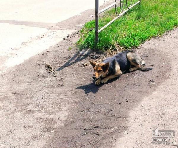 лучший обменный бездомные собаки кривой рог часто проветривать